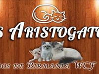 Los Aristogatos Sagrados De Birmania
