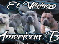 El Vikingo Kennel