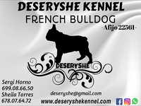 Buldog Frances, Deseryshe Kennel, Barcelona
